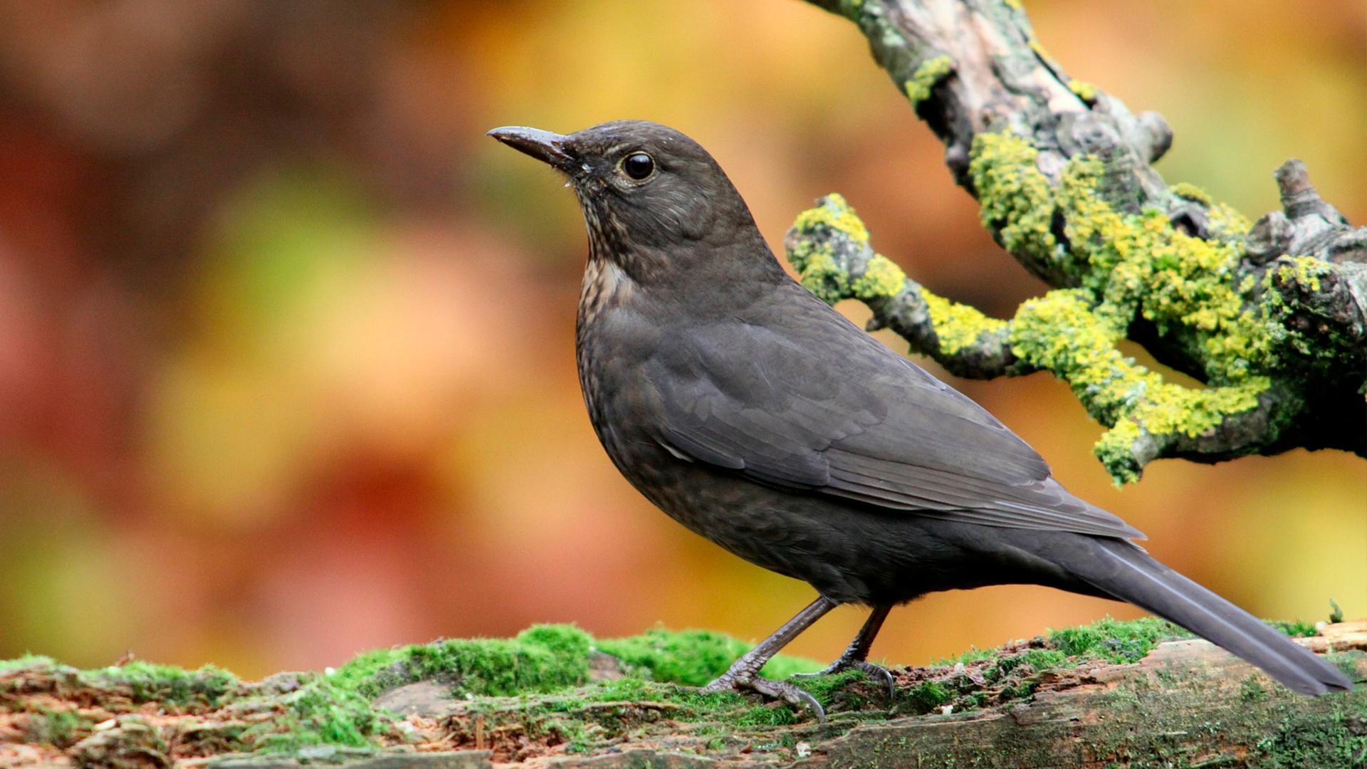 Vogels Nederland Tuin : Drenthe de mooiste provincie van nederland